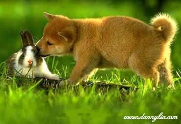 O Coelho e o Cão