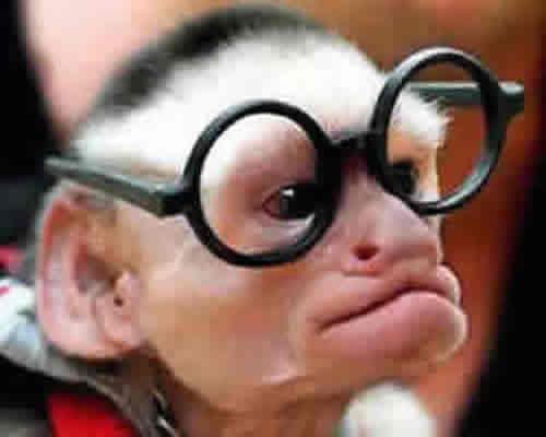 O Macaco Nerd
