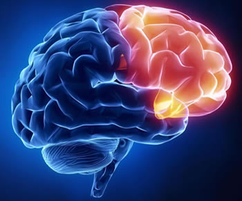 Nosso Cérebro é Doido