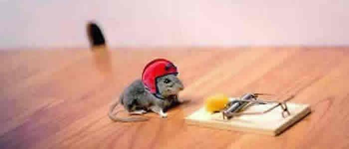 O Rato Prevenido
