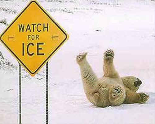 Placas Informativa para Ursos Polares